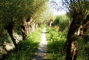 mindfulness-stilte wandelingen Rhoonse Grienden
